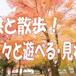 伊島小学校近くの公園 子供と散歩が出来る 岡山県総合グラウンド の紅葉