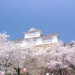 鶴山公園へ花見 桜が満開![岡山県津山市]