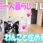 ペット可 賃貸物件・1LDKアパート[岡山市北区東古松]