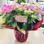 母の日プレゼント アジサイ 花屋さんへ 岡山市南区