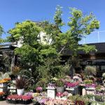 友人の花屋さんで撮影のお手伝い 岡山市南区