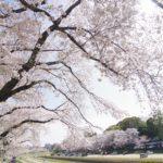 後楽園 旭川でお花見 2021