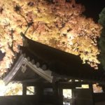 閑谷学校の紅葉 木の葉舞い散る風景 動画